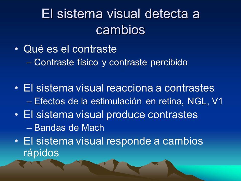 El sistema visual detecta a cambios