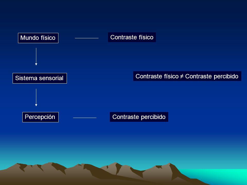 Mundo físico Contraste físico. Contraste físico ≠ Contraste percibido. Sistema sensorial. Percepción.