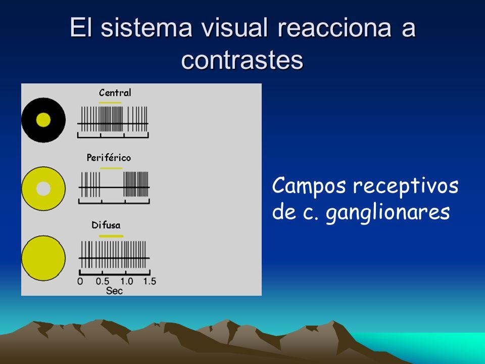 El sistema visual reacciona a contrastes