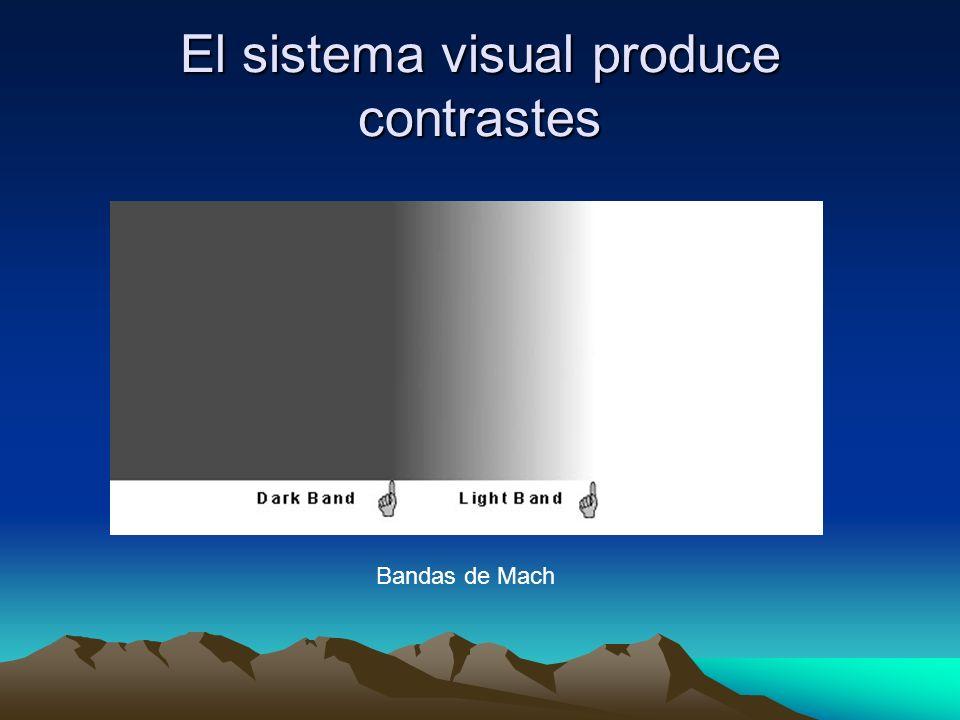 El sistema visual produce contrastes