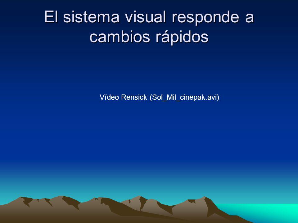 El sistema visual responde a cambios rápidos