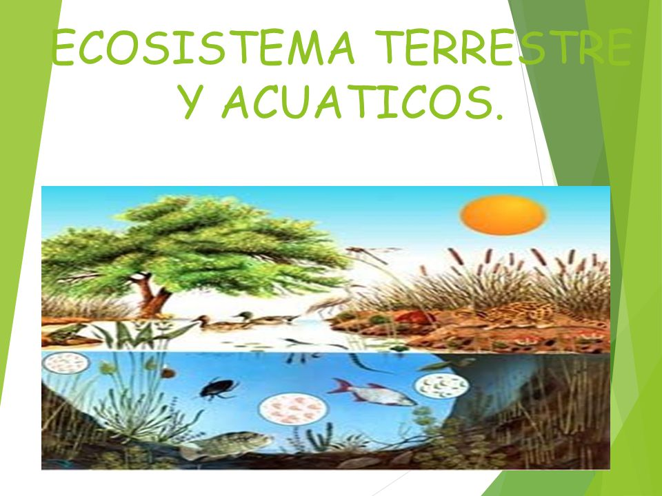 ECOSISTEMA TERRESTRE Y ACUATICOS.
