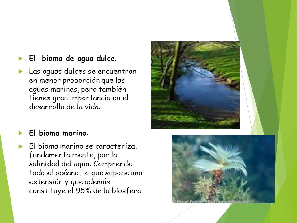 El bioma de agua dulce.