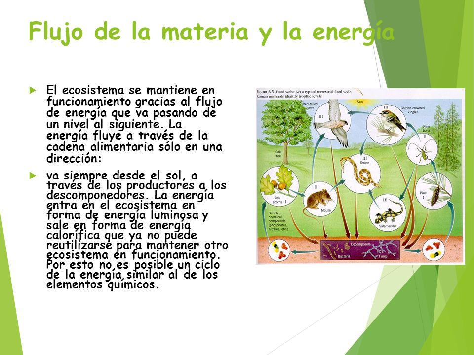 Flujo de la materia y la energía
