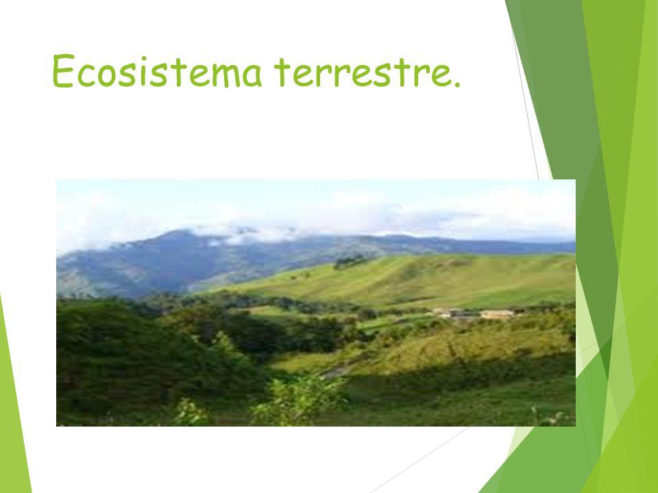 Ecosistema terrestre.