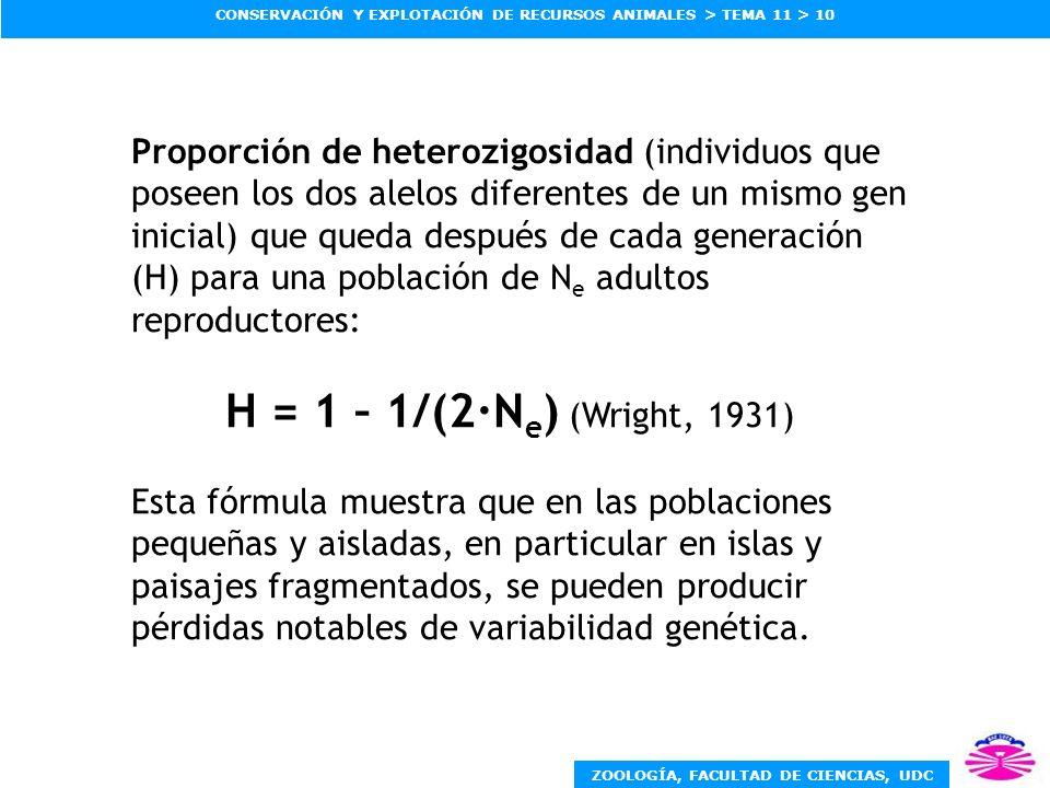 Proporción de heterozigosidad (individuos que poseen los dos alelos diferentes de un mismo gen inicial) que queda después de cada generación (H) para una población de Ne adultos reproductores: