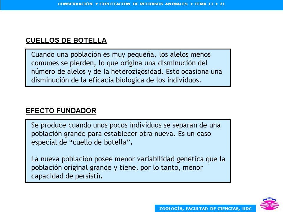 CUELLOS DE BOTELLA