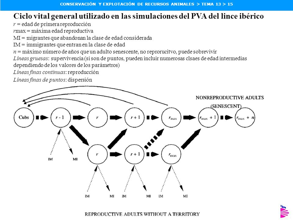 Ciclo vital general utilizado en las simulaciones del PVA del lince ibérico