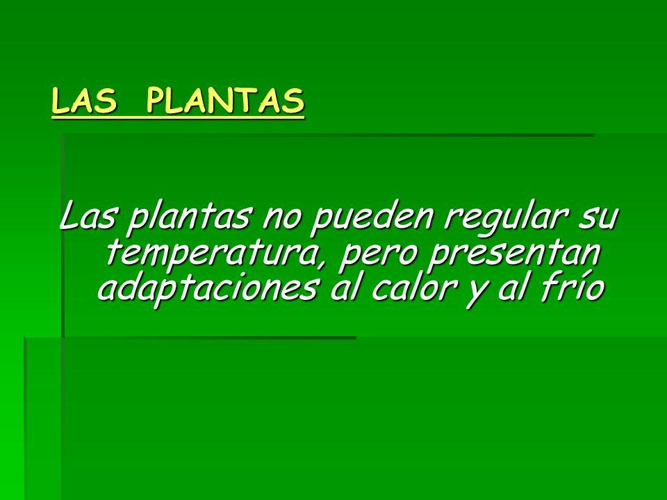 LAS PLANTAS Las plantas no pueden regular su temperatura, pero presentan adaptaciones al calor y al frío.