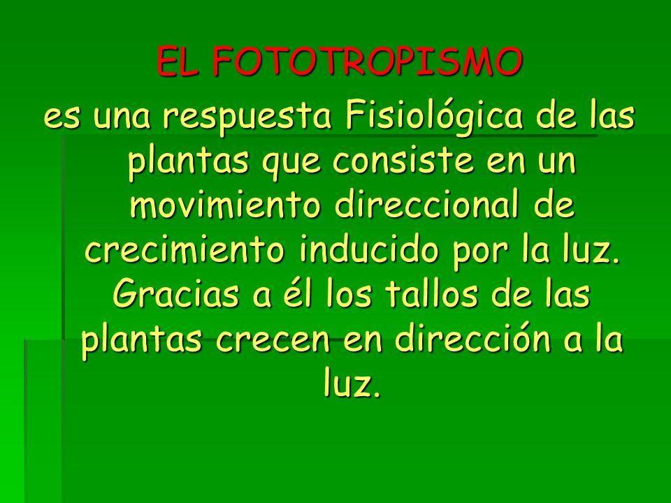 EL FOTOTROPISMO