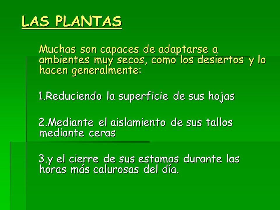 LAS PLANTAS 1.Reduciendo la superficie de sus hojas