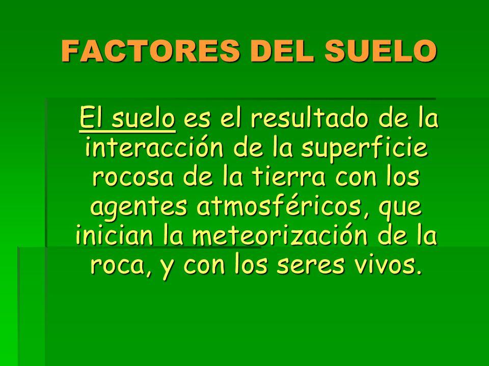 FACTORES DEL SUELO