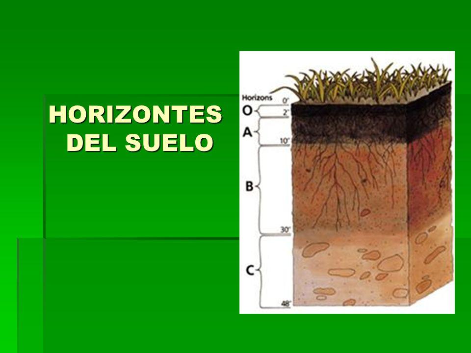 HORIZONTES DEL SUELO