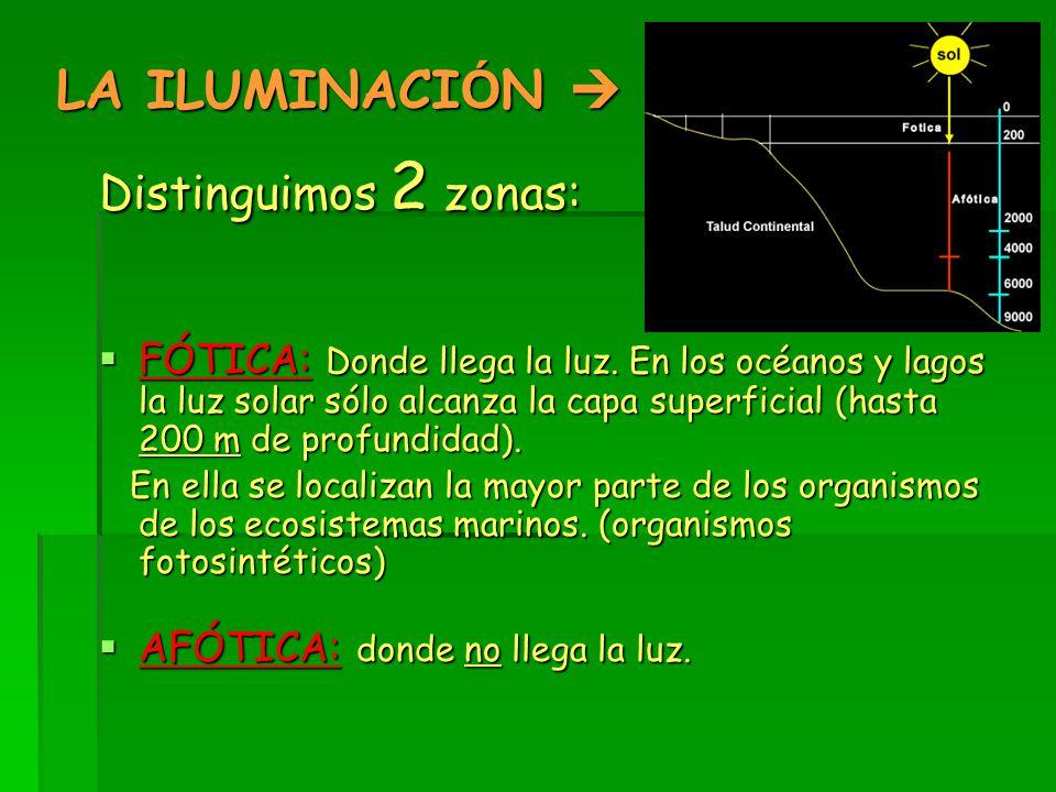 LA ILUMINACIÓN  Distinguimos 2 zonas: