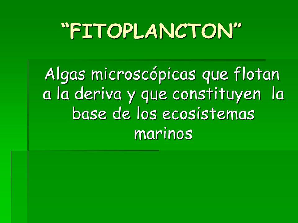 FITOPLANCTON Algas microscópicas que flotan a la deriva y que constituyen la base de los ecosistemas marinos.