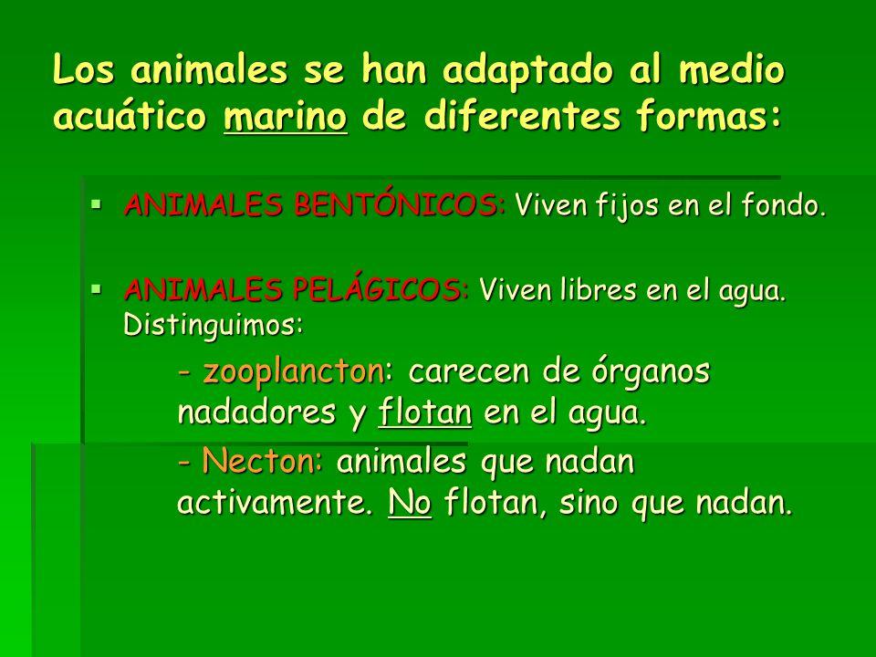 Los animales se han adaptado al medio acuático marino de diferentes formas: