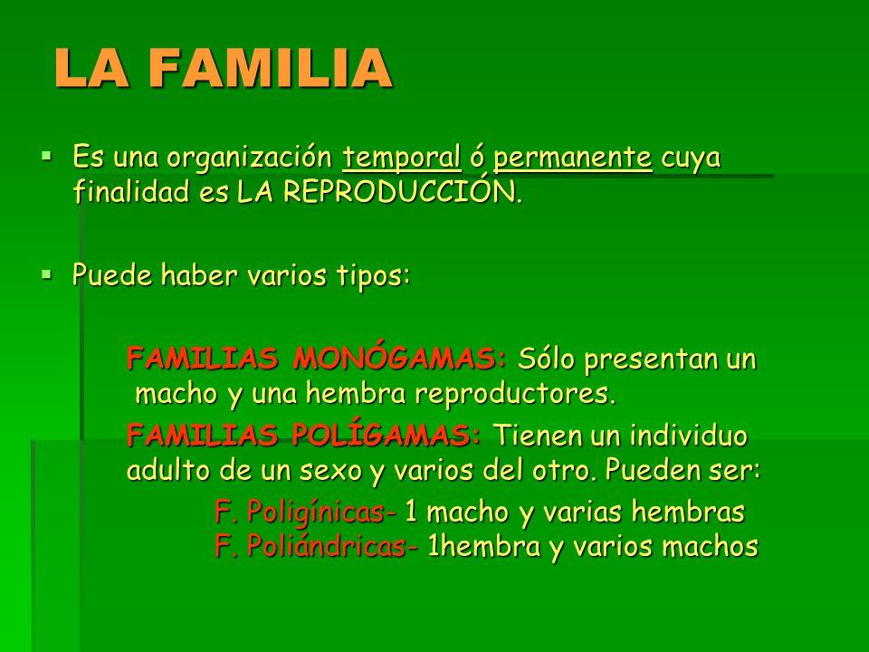 LA FAMILIA Es una organización temporal ó permanente cuya finalidad es LA REPRODUCCIÓN. Puede haber varios tipos: