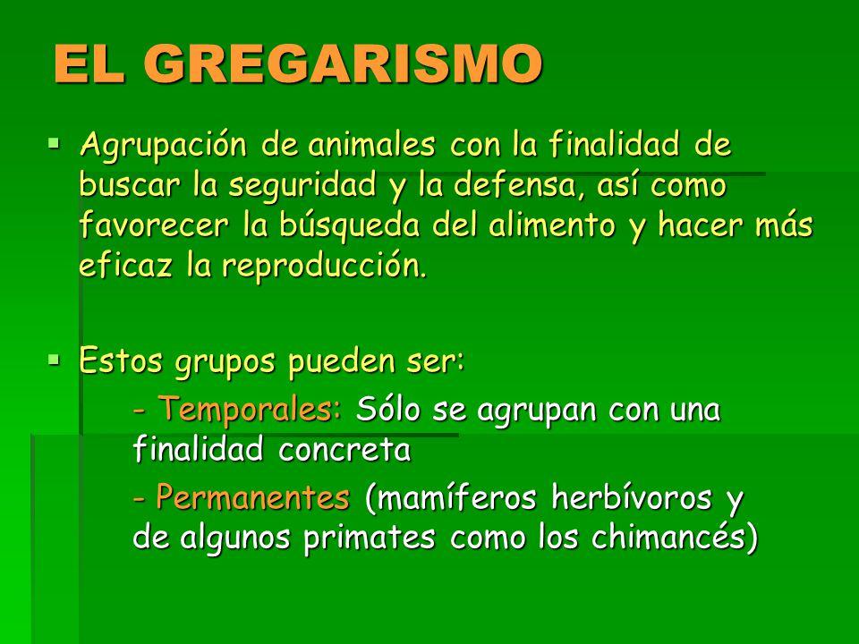 EL GREGARISMO