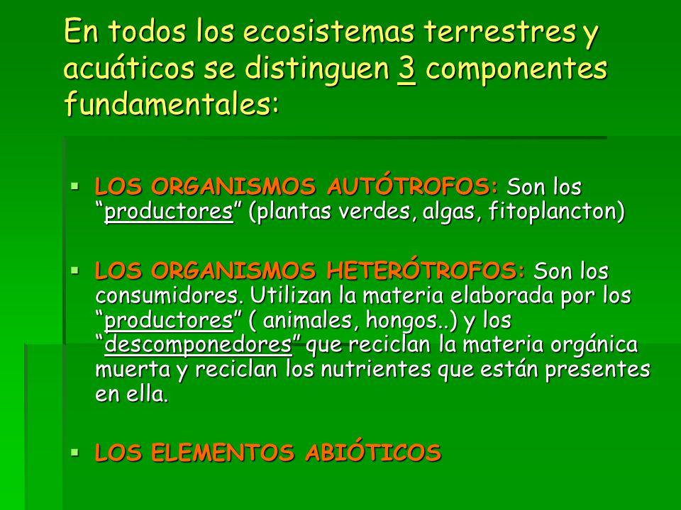 En todos los ecosistemas terrestres y acuáticos se distinguen 3 componentes fundamentales: