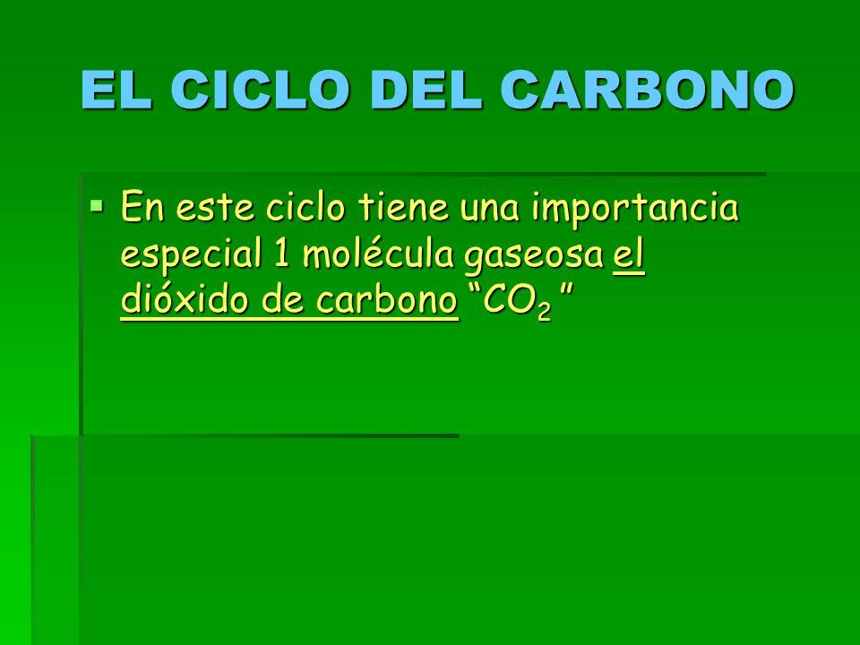 EL CICLO DEL CARBONO En este ciclo tiene una importancia especial 1 molécula gaseosa el dióxido de carbono CO2