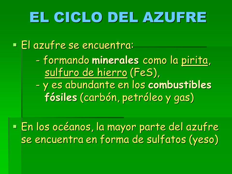 EL CICLO DEL AZUFRE El azufre se encuentra: