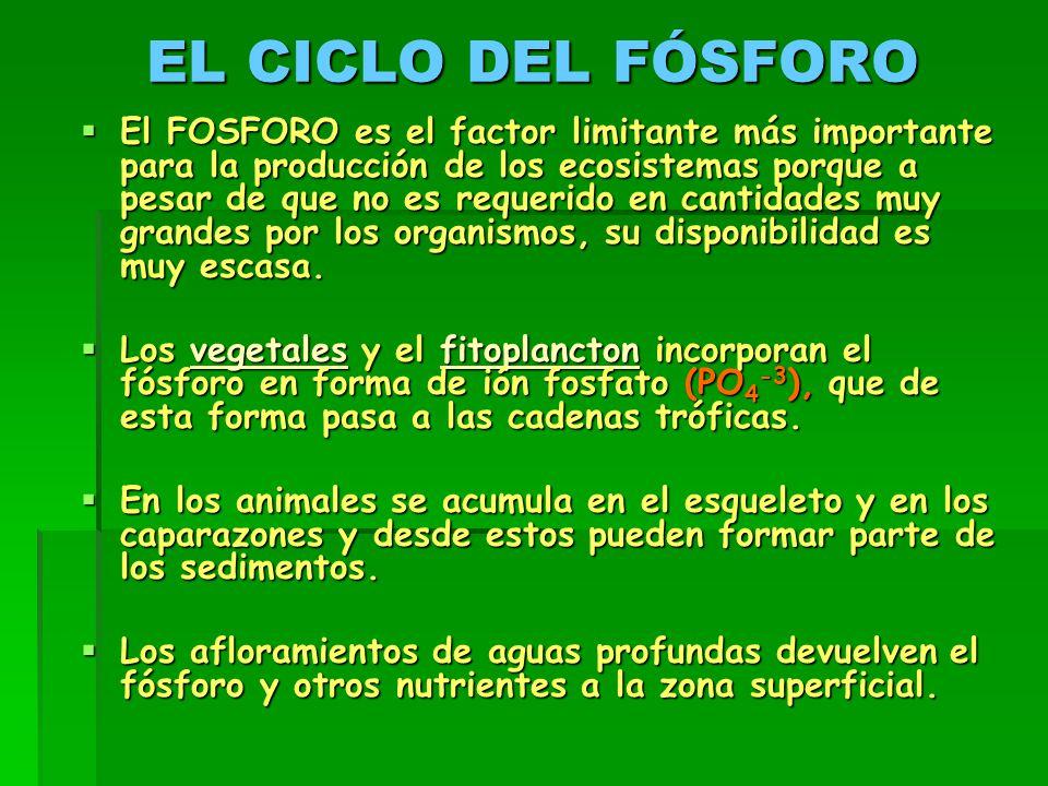 EL CICLO DEL FÓSFORO