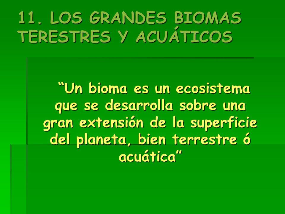 11. LOS GRANDES BIOMAS TERESTRES Y ACUÁTICOS