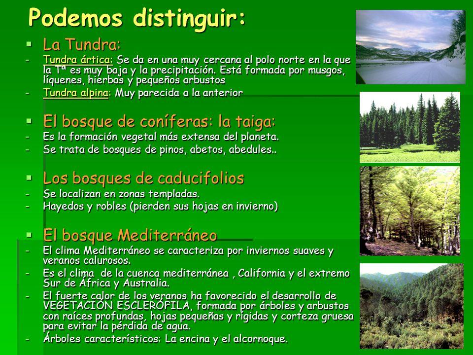 Podemos distinguir: La Tundra: El bosque de coníferas: la taiga: