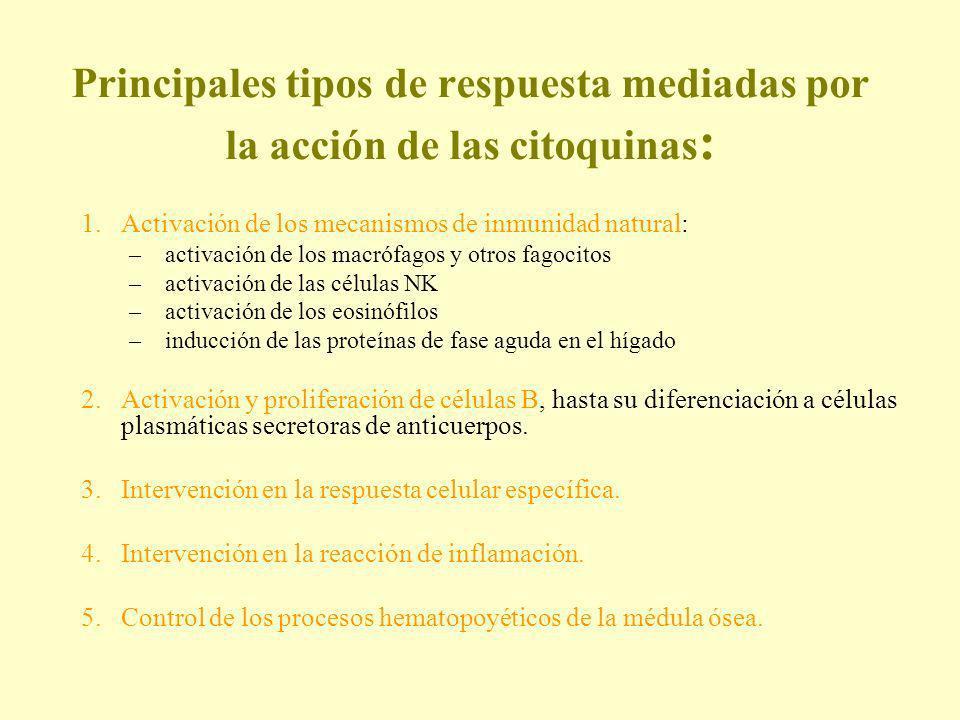 Principales tipos de respuesta mediadas por la acción de las citoquinas: