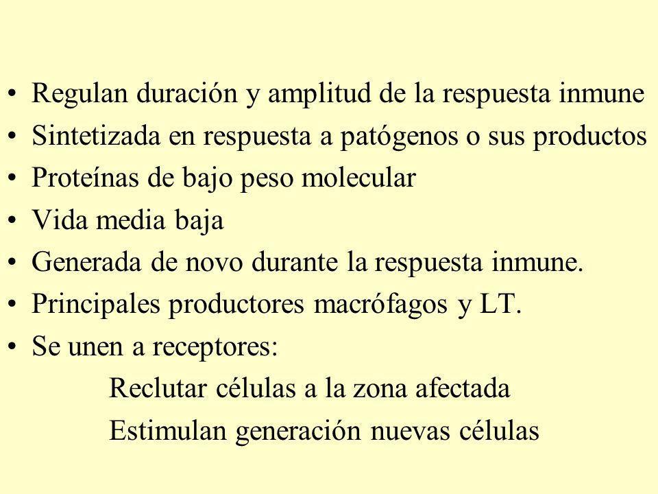Regulan duración y amplitud de la respuesta inmune
