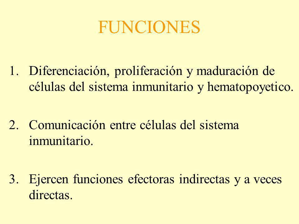 FUNCIONES Diferenciación, proliferación y maduración de células del sistema inmunitario y hematopoyetico.