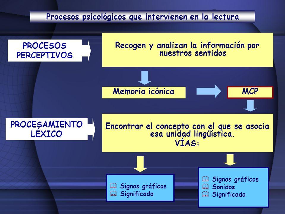 Procesos psicológicos que intervienen en la lectura