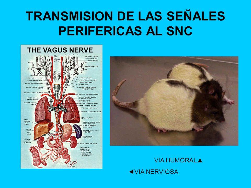 TRANSMISION DE LAS SEÑALES PERIFERICAS AL SNC