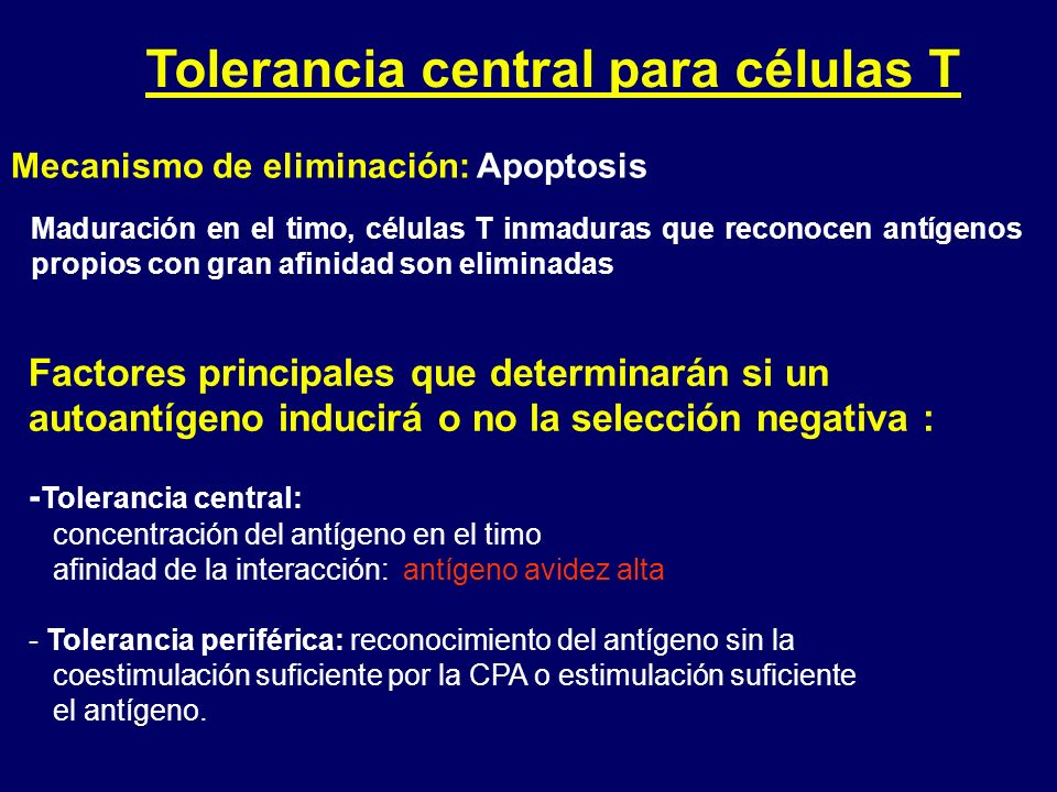 Tolerancia central para células T