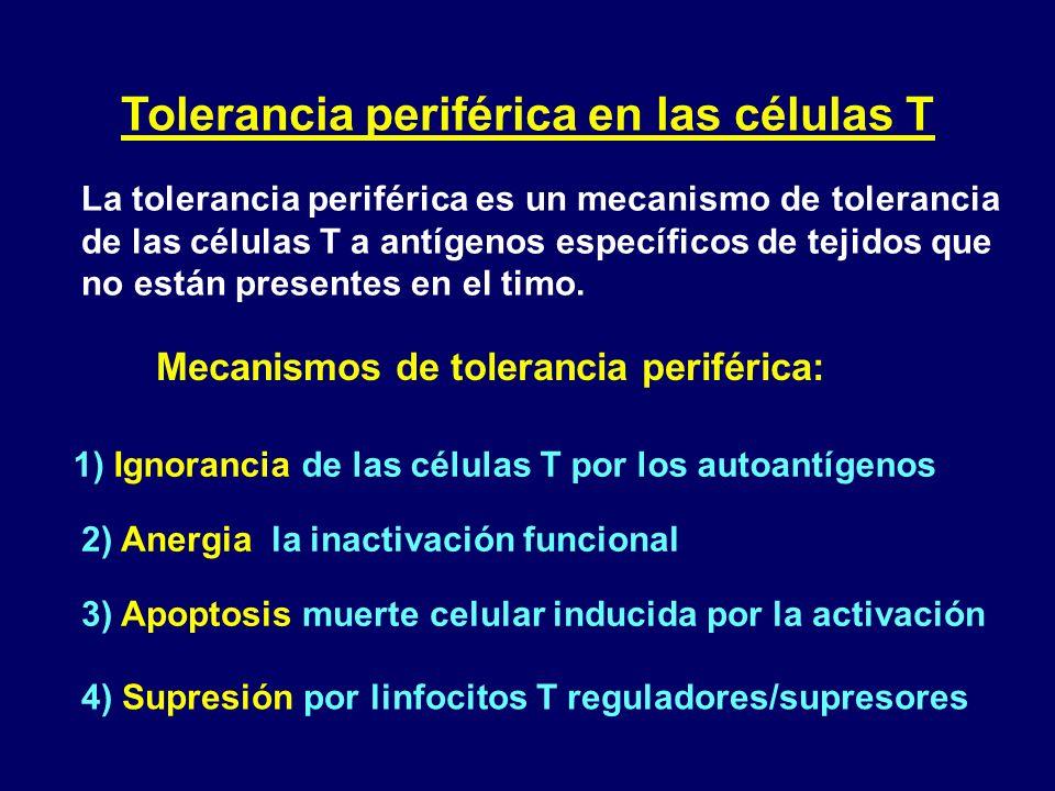 Tolerancia periférica en las células T