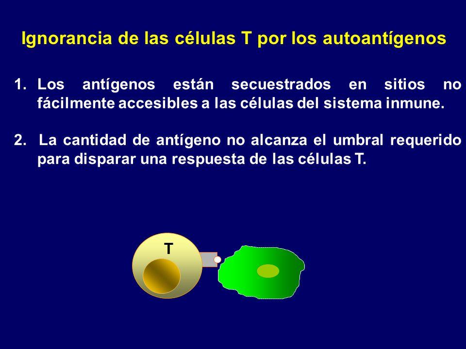 Ignorancia de las células T por los autoantígenos