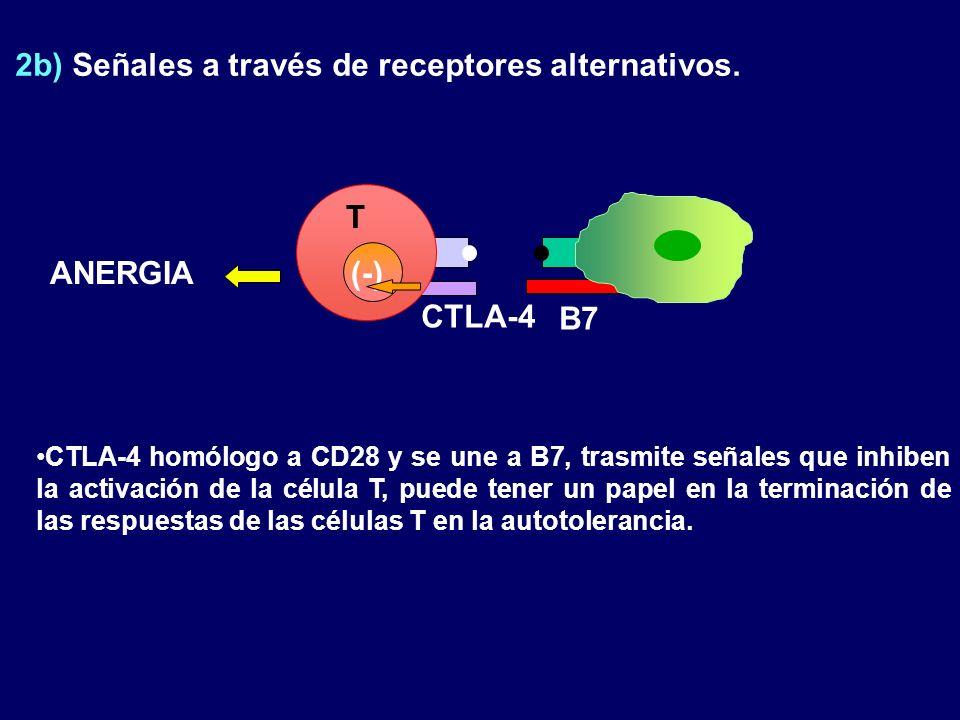 2b) Señales a través de receptores alternativos.