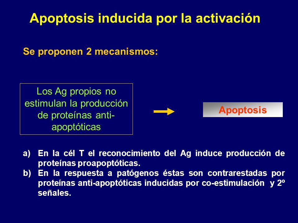 Apoptosis inducida por la activación