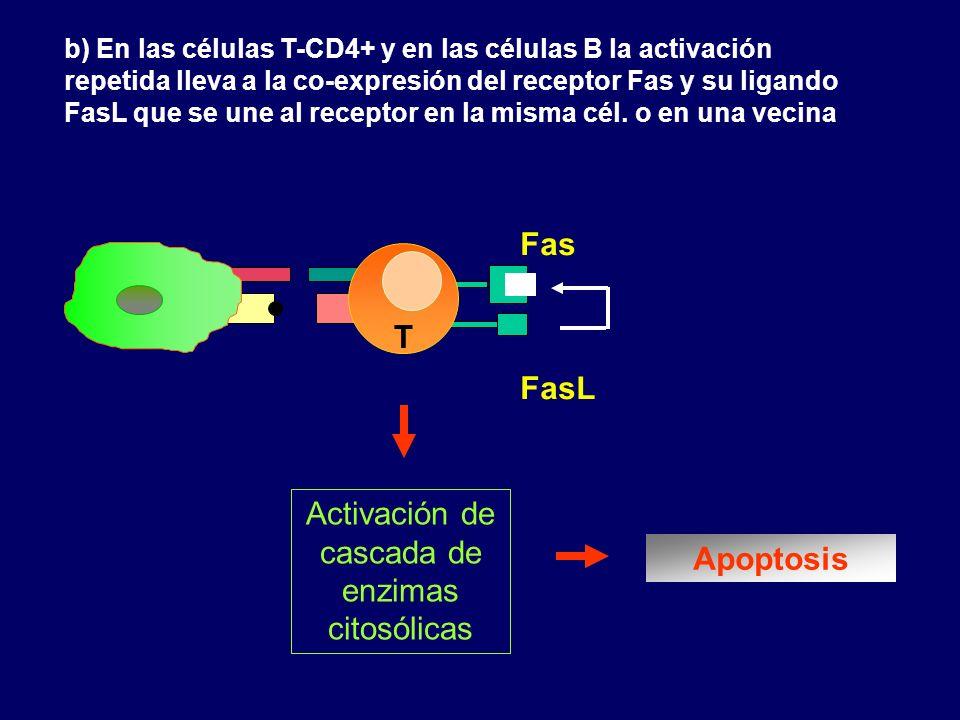 Activación de cascada de enzimas citosólicas