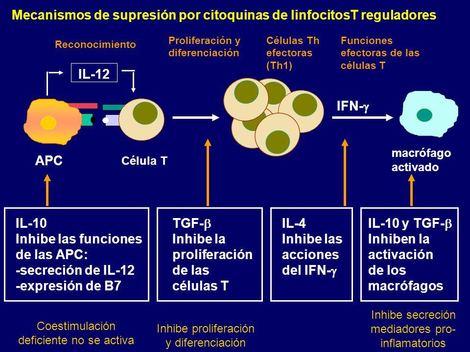 Mecanismos de supresión por citoquinas de linfocitosT reguladores
