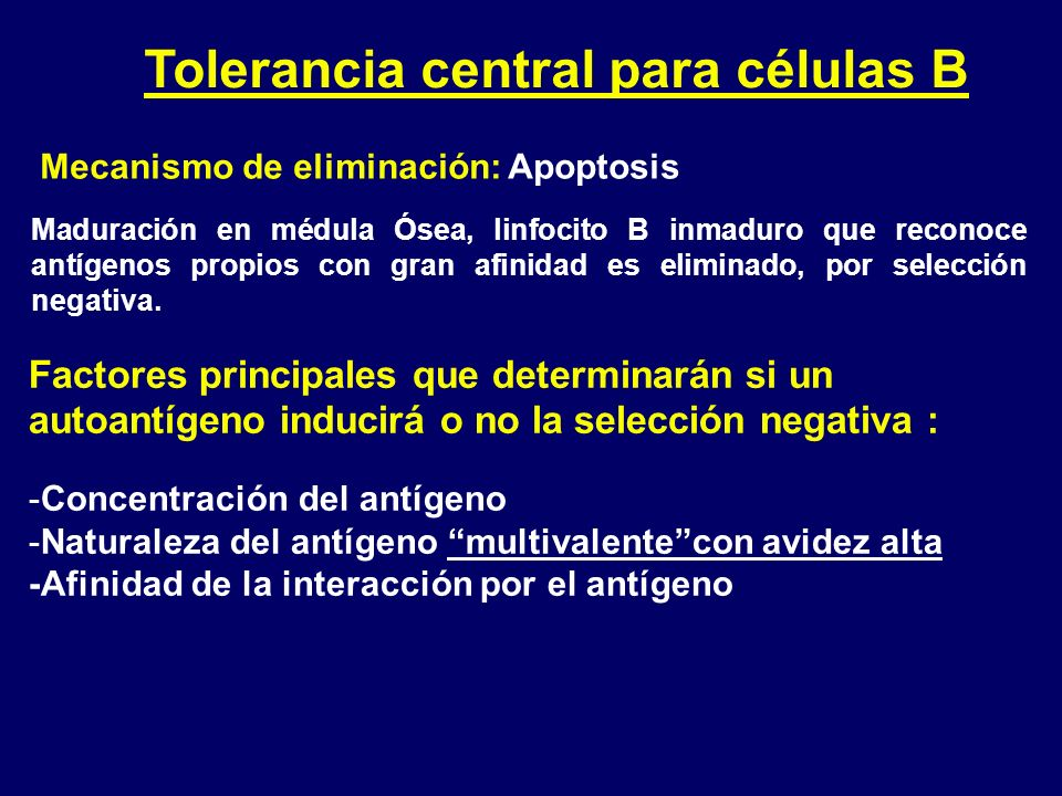 Tolerancia central para células B