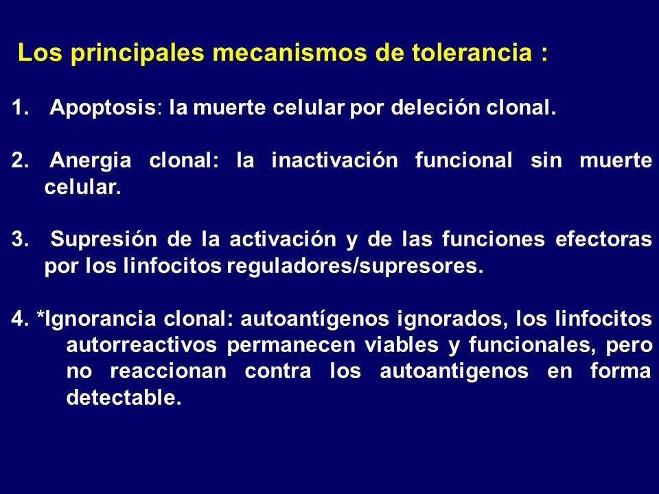 Los principales mecanismos de tolerancia :