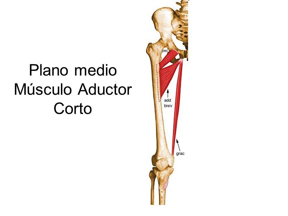 Excepcional Músculo Abductor Composición - Anatomía de Las ...