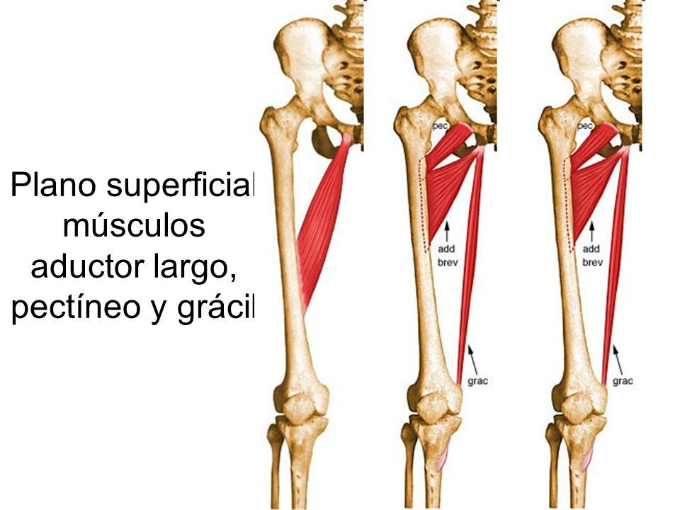El blog de Francisco Gilo: Pubalgia por tendinitis de adductores
