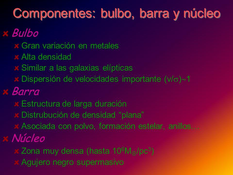 Componentes: bulbo, barra y núcleo
