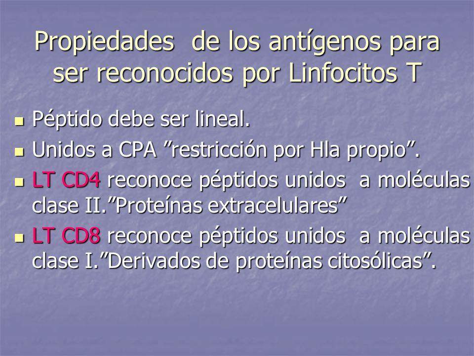 Propiedades de los antígenos para ser reconocidos por Linfocitos T