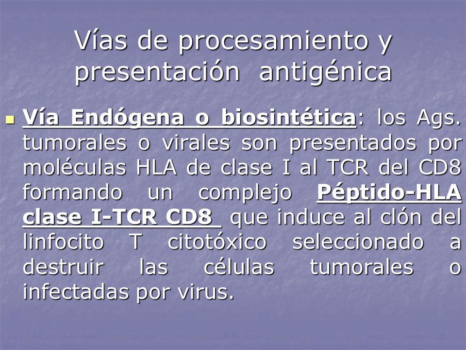 Vías de procesamiento y presentación antigénica