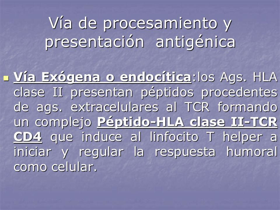 Vía de procesamiento y presentación antigénica