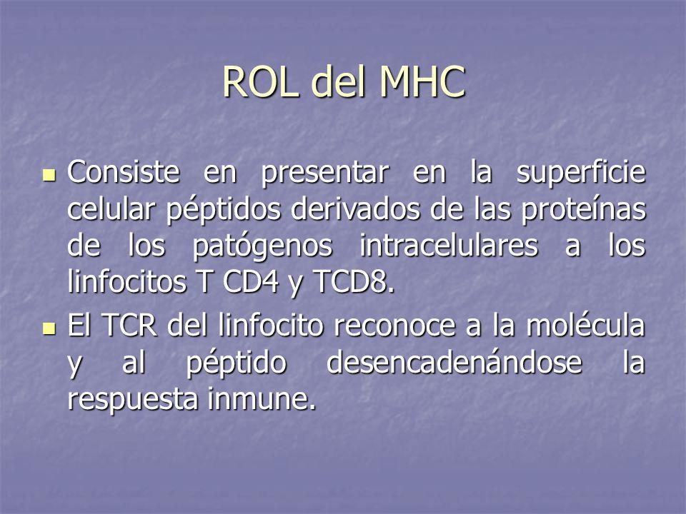 ROL del MHC