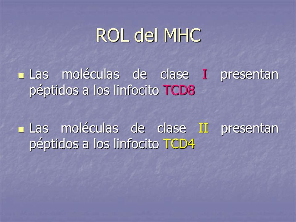 ROL del MHCLas moléculas de clase I presentan péptidos a los linfocito TCD8.